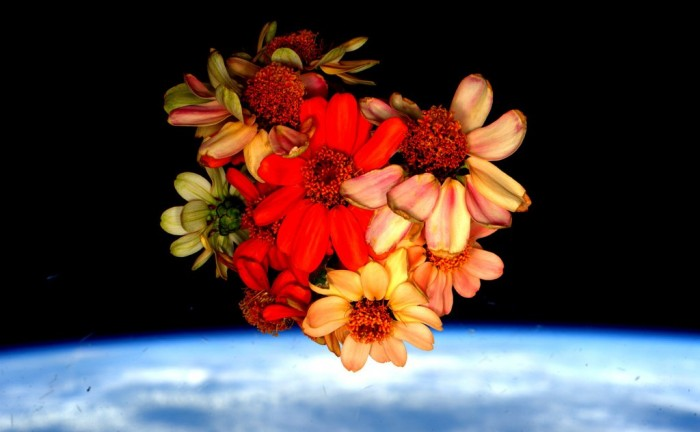 NASA flowers Scott Kelly 2016