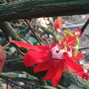 astrobotany tropical flower