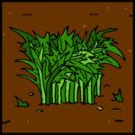 astrobotany mizuna lettuce plant