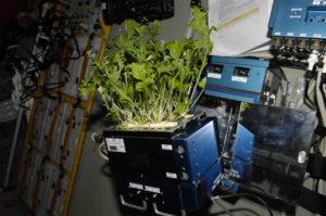 astrobotany mizuna lettuce iss