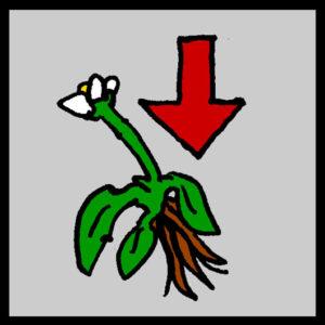 astrobotany plant gravity