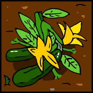 astrobotany zucchini plant