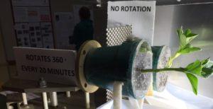 astrobotany uw clinostat biotron