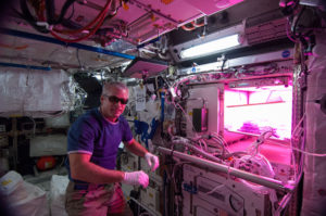 Steve Swanson Astronaut astrobotany plants in space veggie