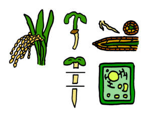plants graphic astrobotany